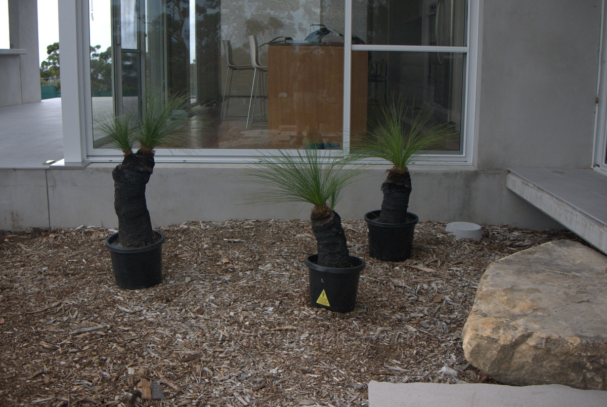 How to Plant a Grass Tree , Mallee Design