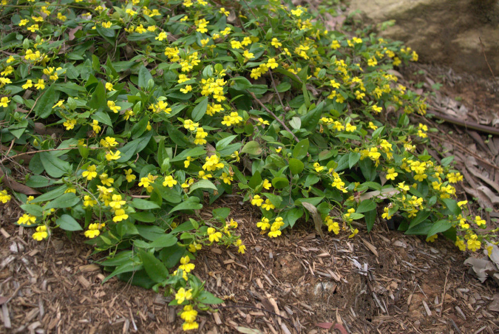 Hardy Ground Cover Plants